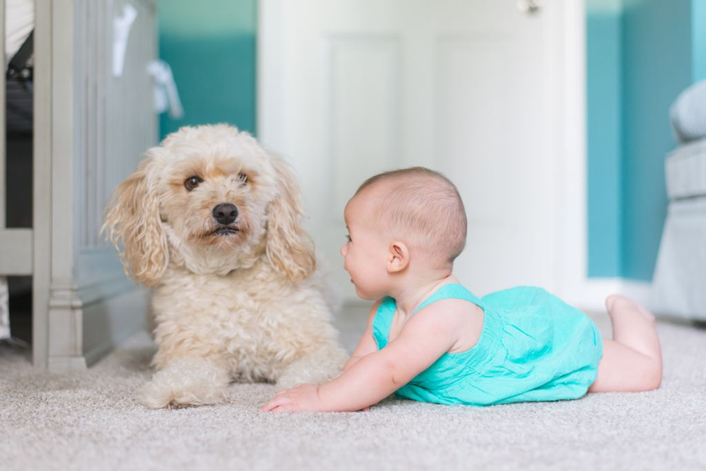 Our cleaning products are safe for pets and children