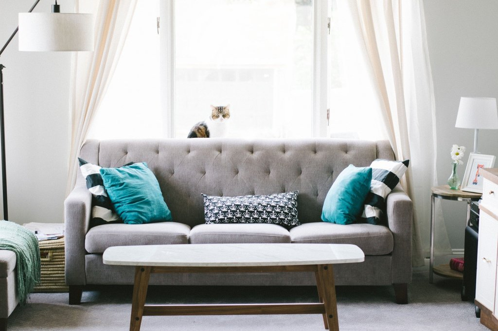 Pet friendly upholstery cleaning services